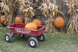 pumpkin, wagon, silo, rp