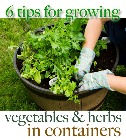 Best Vegetables To Grow In Raised Beds: Shorewest's DIY Project: How To Grow Vegetables & Herbs In