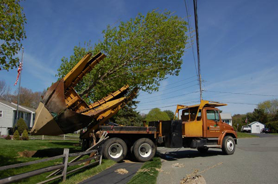 tree mover machine