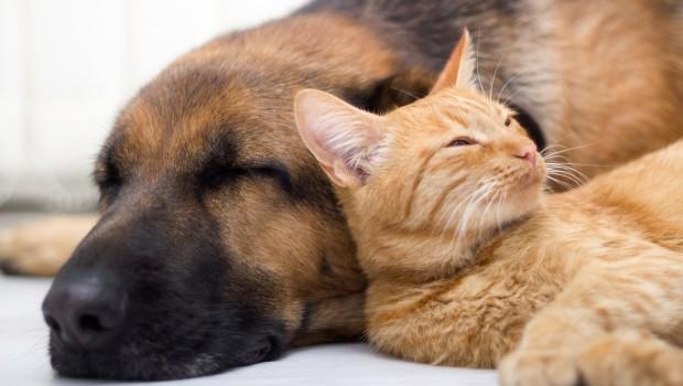 dog-cat-napping
