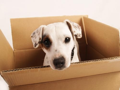 moving-box-with-dog