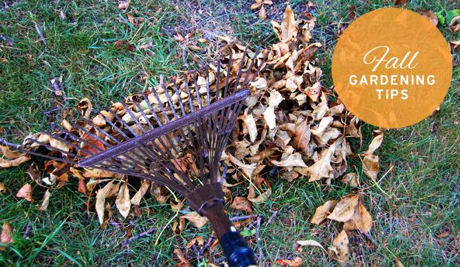 fall-gardening-1