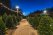 Christmas Tree Shopping in Southeastern Wisconsin